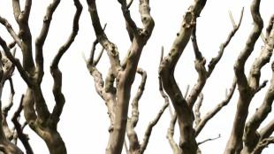 branches arbre #2